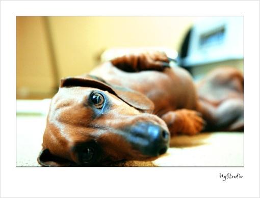 dog_photos_20071013_1.jpg