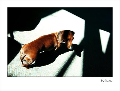 dog_photos_20071013_2.jpg
