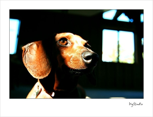 dog_photos_20071013_3.jpg