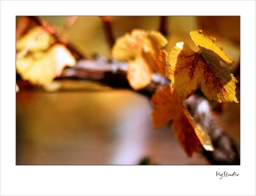 thomas_fogarty_winery_20071022_3.jpg