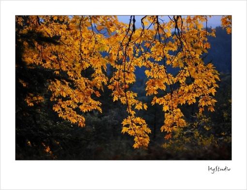 fall_2008_01